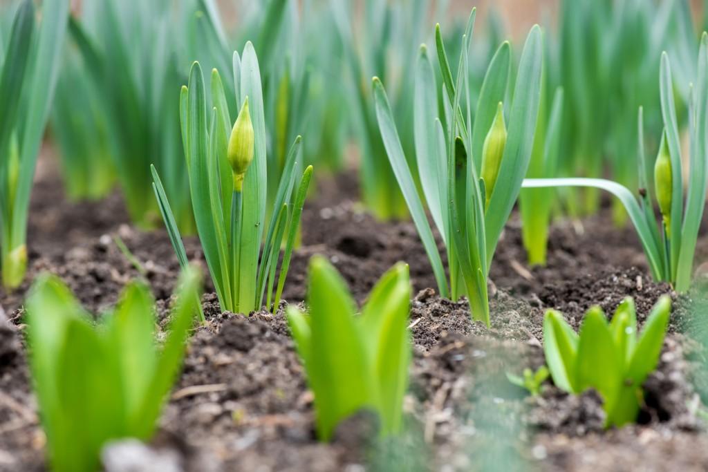 Spring is springing!