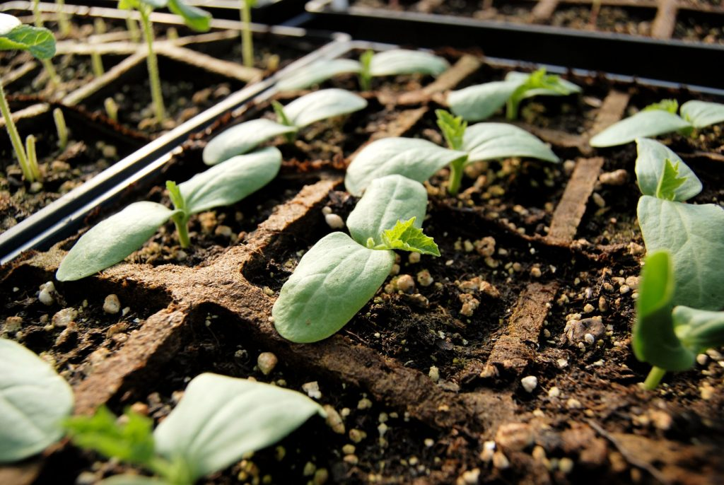 Fragile seedlings need a delicate touch and gentle watering.