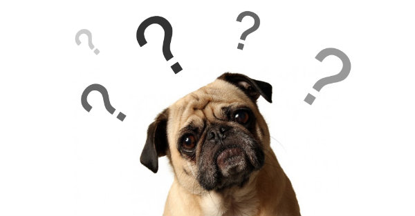 What to Look for When Buying Dog Food