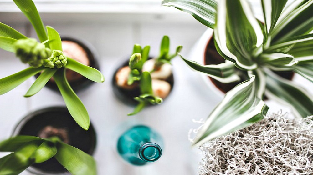 House Plants | Feature | Air Purifier | 4 Ways To Purify Indoor Air Naturally