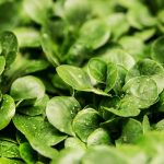 Grow Your Own Early Summer Salad Leaves (With A Little Help From Your Water Ionizer!)