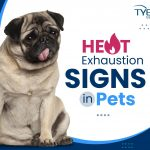 Heat Exhaustion Signs in Pets - Summer Pet Safety Tips
